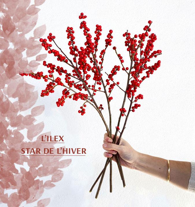 L'ilex, merveilleuse fleur de saison