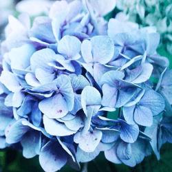 Fleurs et feuillages à la botte
